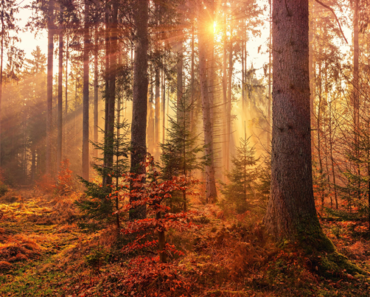 How to survive the autumn spleen?